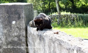 black cat on a wall illustrating an article for writers about getting addicted to social network sites