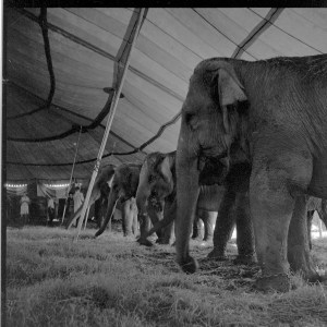 PE - Cash for clunkers - elephants under the bigtop