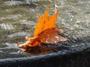 Blad in fontein