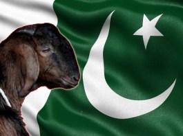 pakistan goat gang rape case