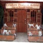 Cachorros Ecuador Russell Terrier Parson Russell Terrier Pratsals Kennels Criadero Pratsals