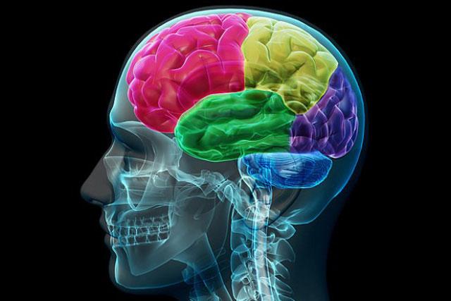 Das menschliche Gehirn ist nicht für Multitasking gemacht   PRAVDA ...