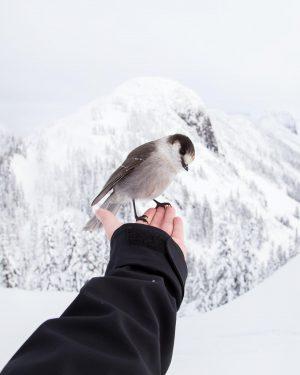 Vertrauen Vogel Hand