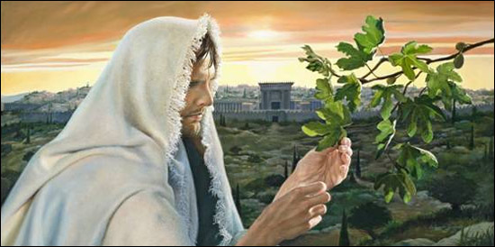 Image result for parable of fig tree matthew 24