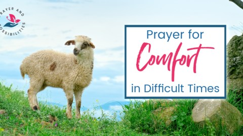 A daily prayer for comfort in difficult times. Pray for God's comfort and strength in hard times. Pray for God to be your shelter from the storm.