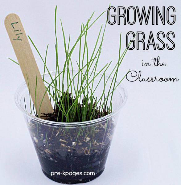 Grow When Activity I Preschool