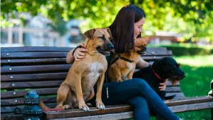 Amazing jobs for dog lovers