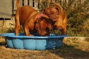 Dogs in a hot weather