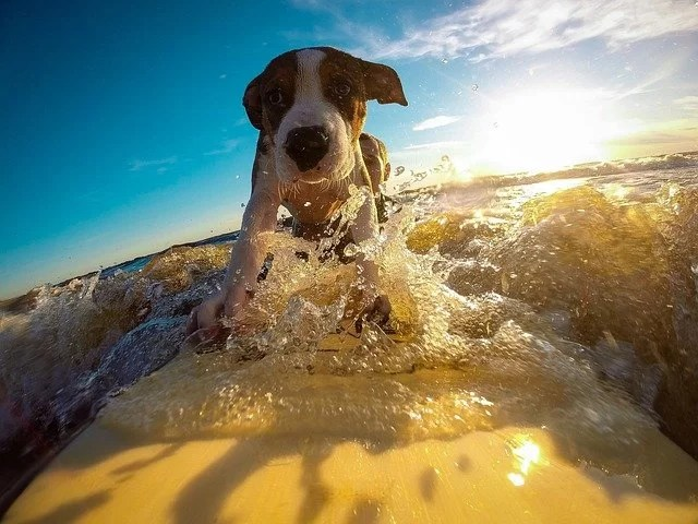 Dog and water activities