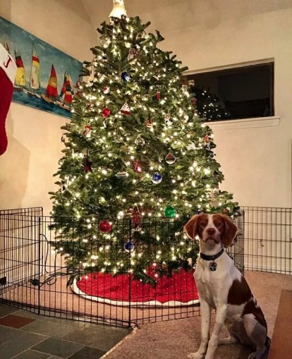 This image has an empty alt attribute; its file name is protecting-christmas-tree-from-dogs-cats-pets-16-585a72c83d944__605.jpg