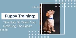 Tips how to teach your dog basics