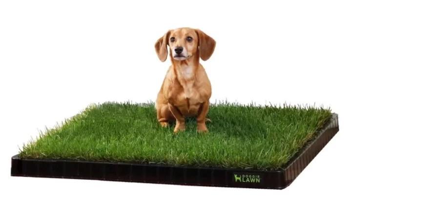 DoggieLawn review