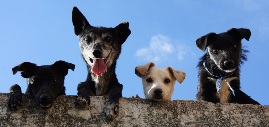 Ways To Keep Your Dog Healthy And Live A Longer Life