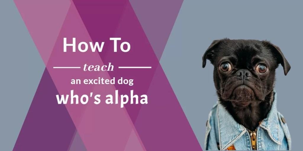 teach your dog who is alpha
