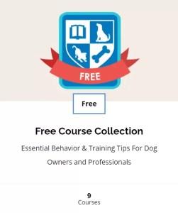 Top Dog Academy