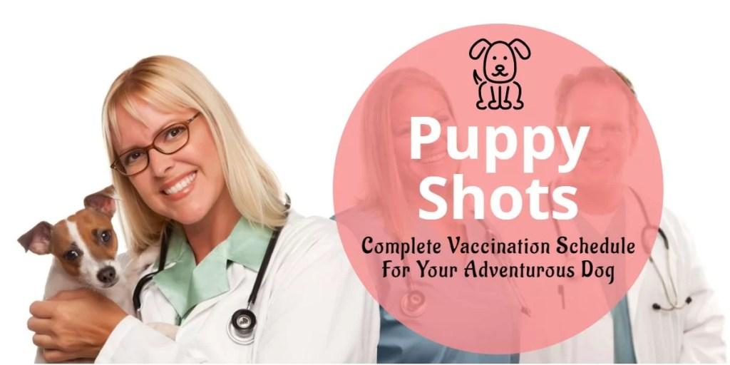 Puppy Schedule Shots vaccination