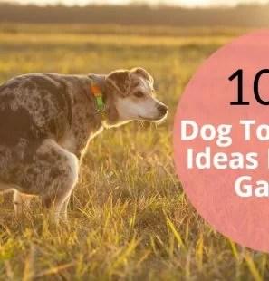 10-Easy-Dog-Toilet-Area-Ideas-For-Your-Garden