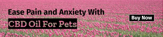 CBD for pain and axiety
