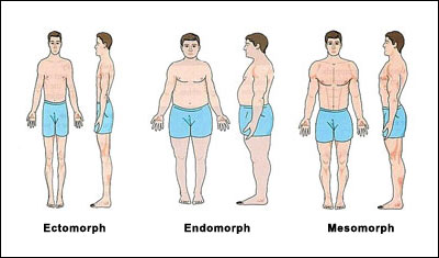 somatotype body types All About Eating For Your Body Type