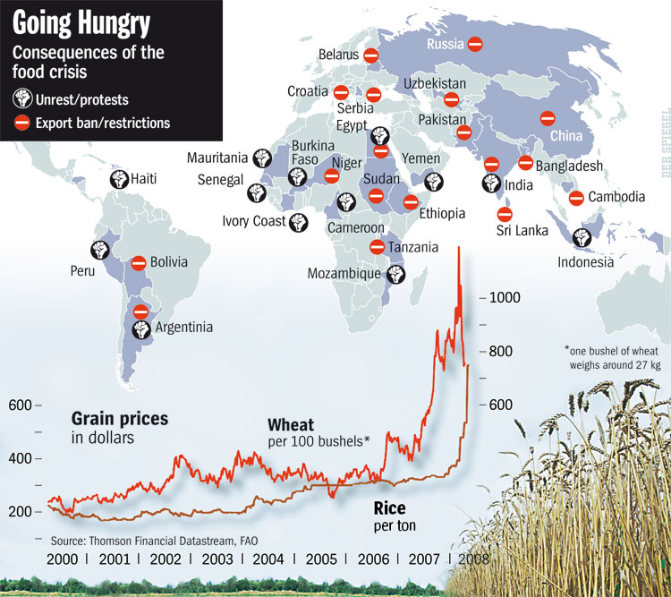 going hungry consequences of the food crisis