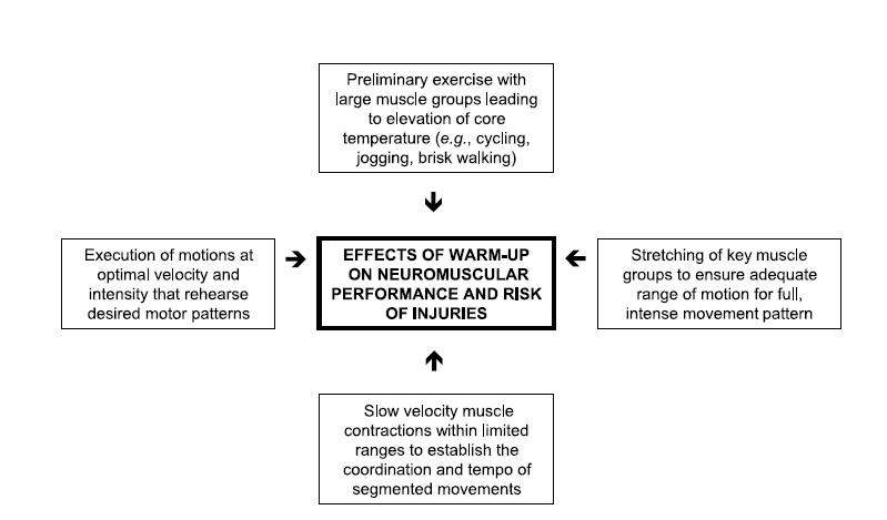 major components of an effective warm up before exercise