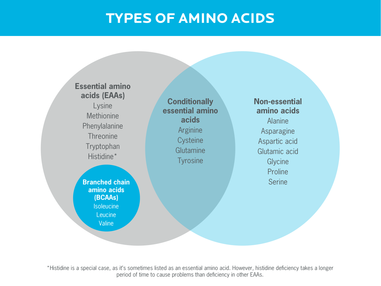 A Venn diagram showing the types of amino acids, including essential amino acids, branched chain amino acids, conditionally essential amino acids, and non-essential amino acids.
