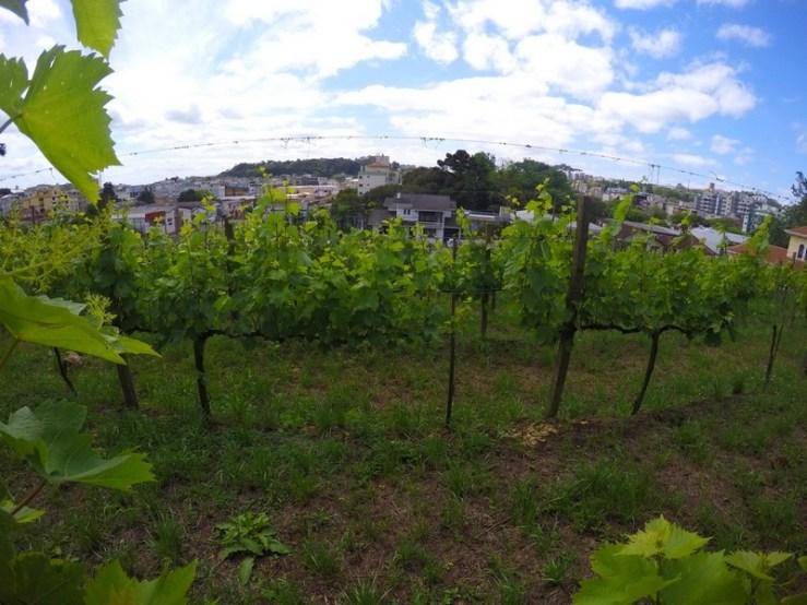 vinícola peterlongo