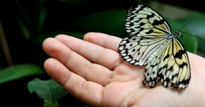 therapy, professional counselor, hand to hold, butterfly