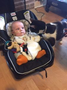 Theo meets James Dean the cat on his first day home from the hospital. Photo credit// Danielle Dreger