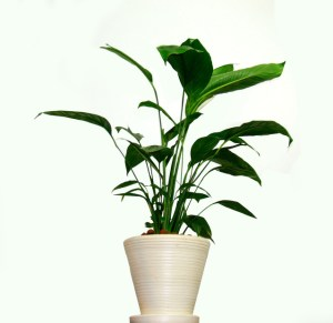 houseplants, isolation, quarantine,