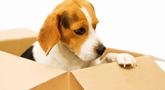 tips-for-moving-with-pets