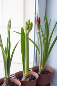 You can be worry free when you leave your plants in a storage that is controlled because your plants will be living on.