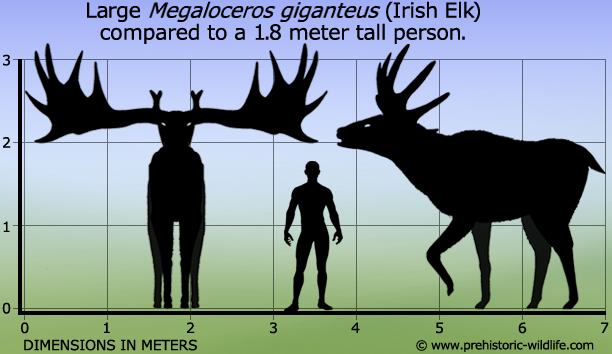 Image result for giant irish elk