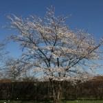 Botanischer_Garten_04
