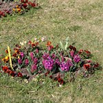 Botanischer_Garten_12