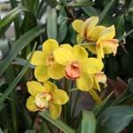 Botanischer_Garten_57