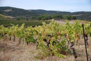 preixan-viticulture