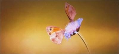 E il fiore divenne farfalla. Massimo Cuomo, la bellezza conquistata
