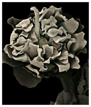 "De la serie fotográfica ""Lumen Naturae"", de Silvia Andrade."