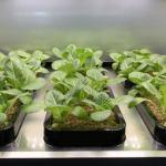 LG desarrolla sistema de jardinería en interiores para cultivar vegetales
