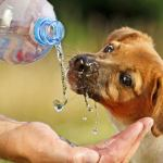 Recomendaciones para evitar que tu mascota sufra de golpe de calor
