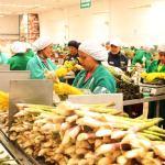 Exportación de frutas y hortalizas en azul el 2019