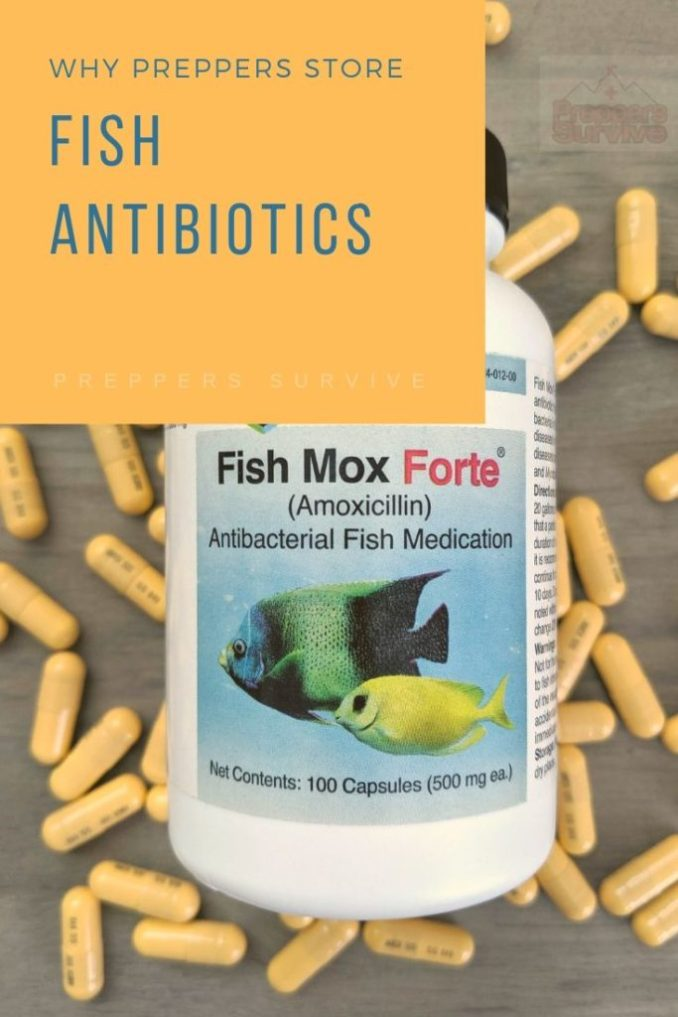 Why do preppers think it's safe to take fish antibiotics? #prepperFishAntibiotics