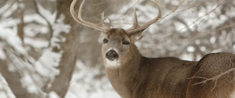 Top 7 Deer Hunting Bullets – Best Ammo Options to Get the Perfect Results