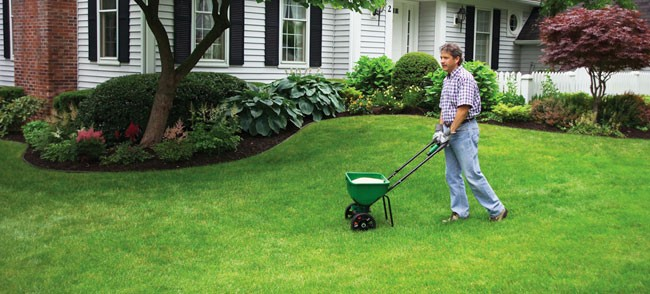 fertilize grass in spring