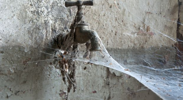 spider's silk