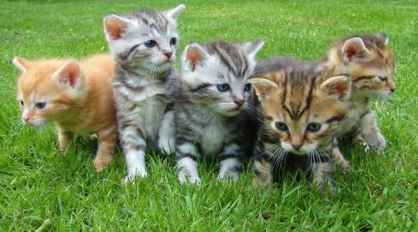 If I were you, I'd adopt all of these cute kittens together!
