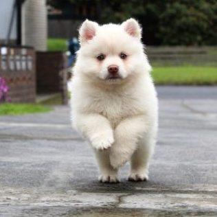 puppy-1790064_640