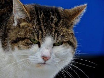 cat-1950632_640