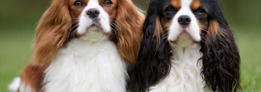 Iata care sunt cele mai potrivite rase de caini de companie